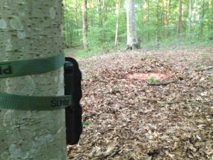 trail photos with critter lick game attractant