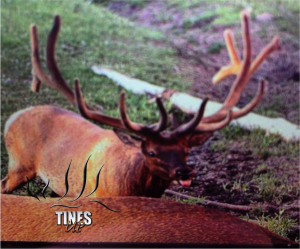 Tines up review