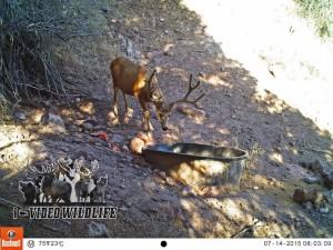 deer attractant critter lick