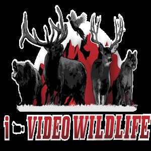 I-Video Wildlife