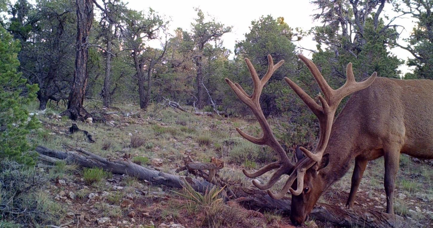 Contact Loco Mountain Outfitters of Colorado for CO Guided Hunting, Colorado Mountain Lion Hunts, Elk Hunting Guides, CO Pronghorn Hunting Outfitters, Colorado Mule Deer Outfitters, Pronghorn Guided Hunts and Much More!